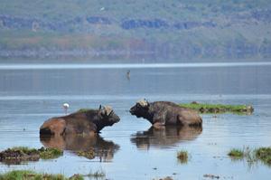 Тур в Кению. Сафари