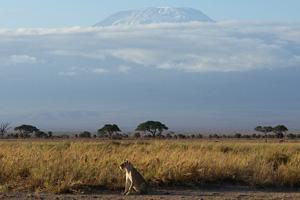 Тур в Уганду, Кению и Танзанию. Сафари