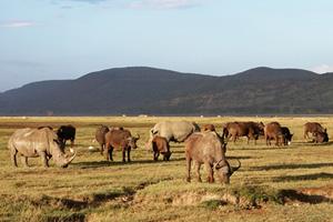 Тур в Кению и Танзанию. Сафари