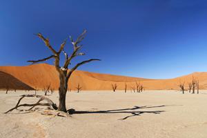Тур в Намибию и Ботсвану. Сафари