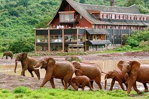 Тур в Кению. Сафари. Африка